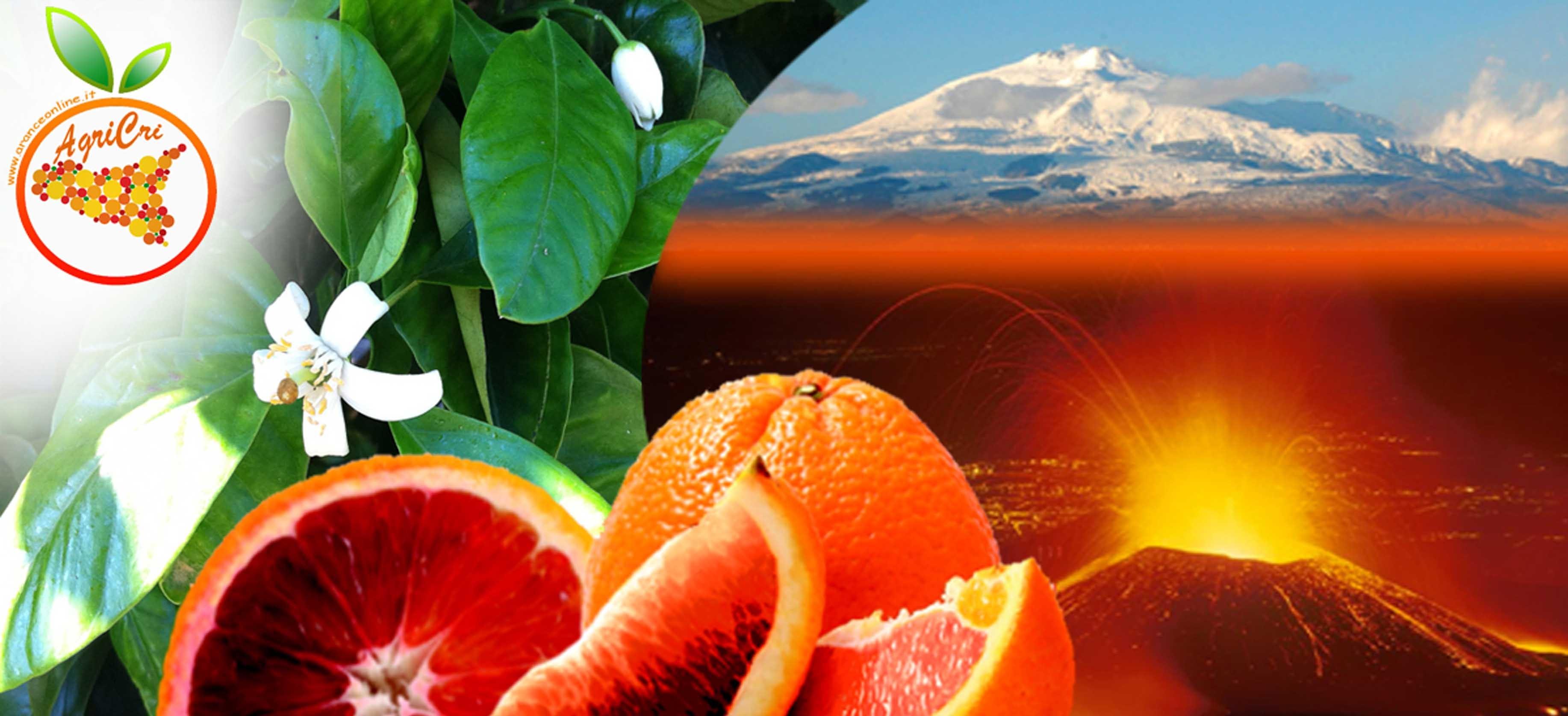 Arance da Spremuta, arance moro, arance tarocco e arance navelina Acquista anche tu le Arance Siciliane con un click