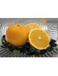 Tarocco oranges