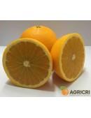 Oranges Tarot