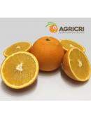 Oranges from Juice