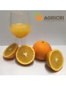 "Oranges ""Navelina"""