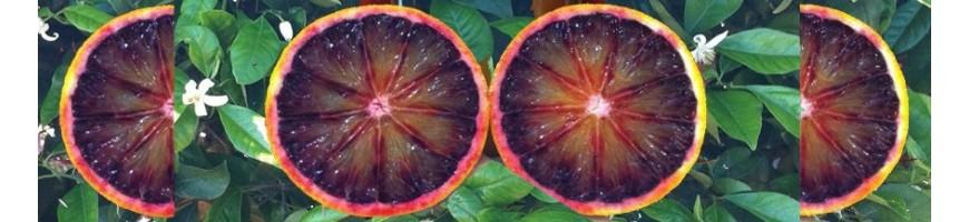 "Oranges ""Moro"""