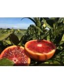 "Oranges ""Tarocco"""