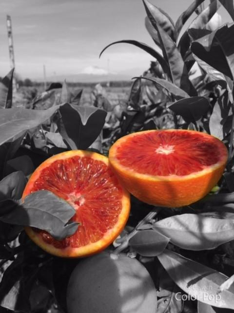 Le Arance Rosse di Sicilia